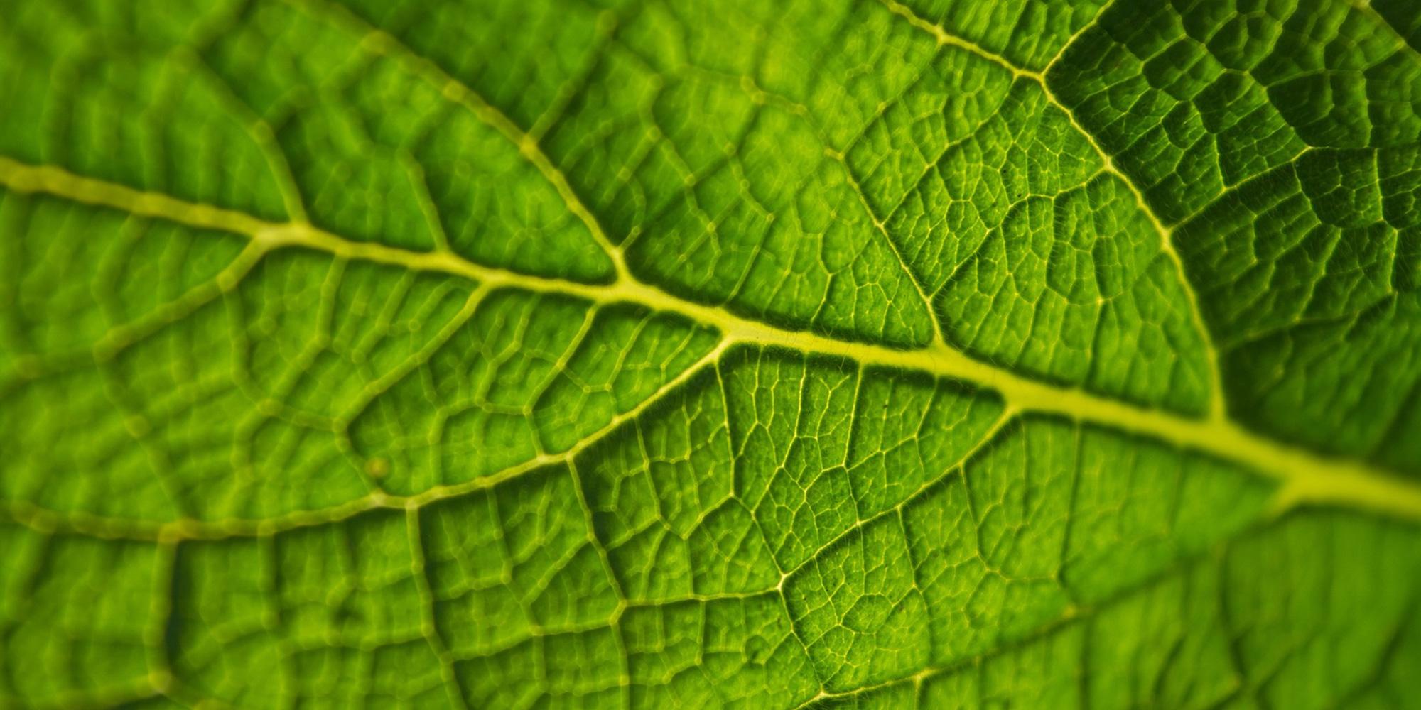 leaf-691754_1920